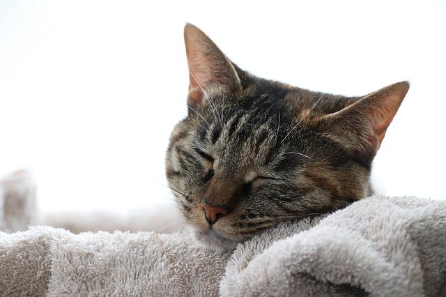 kočka na ručníku