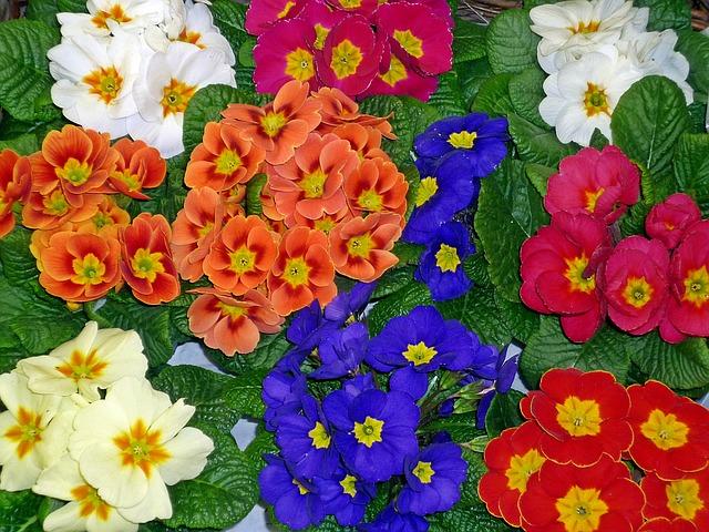 různé barvy květů